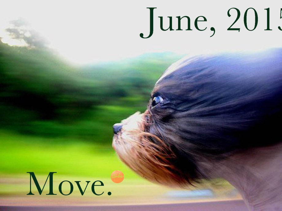This dog moves